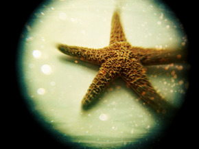 large-171372-starfish--profile-pic